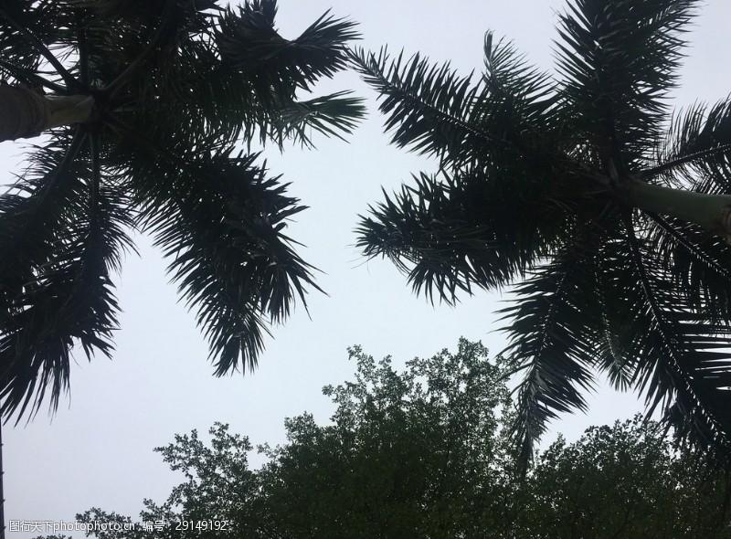 仰视椰子树图片素材3.5米的阳台窗怎样设计图图片