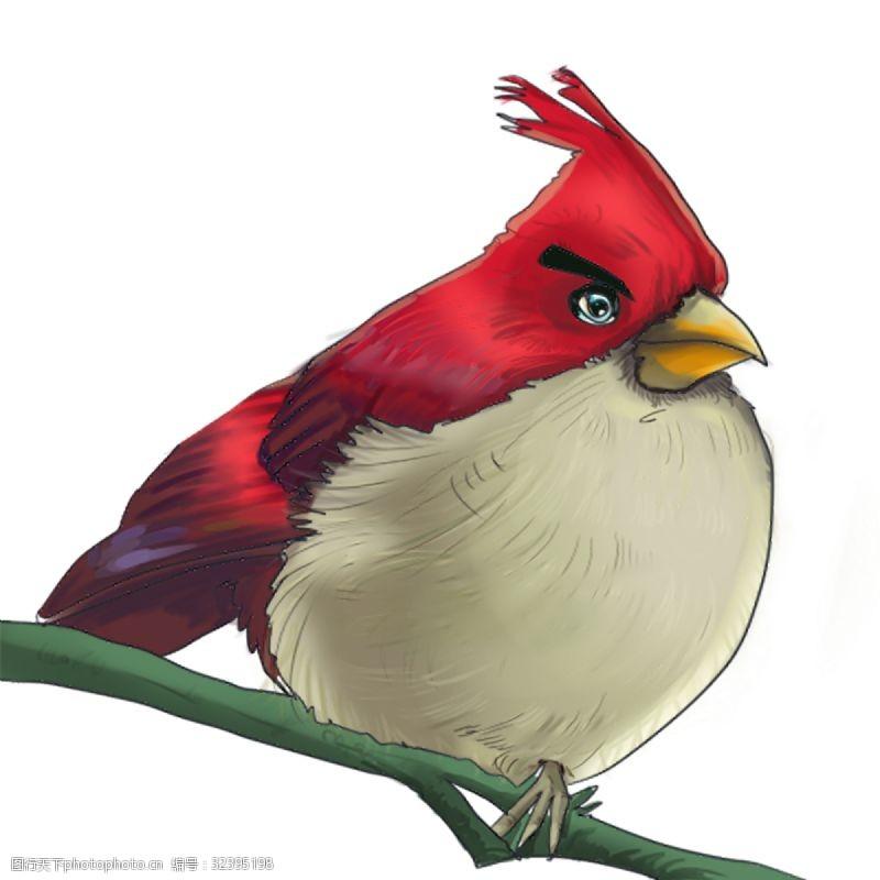 卡通动物漫画红色鹦鹉动物插画