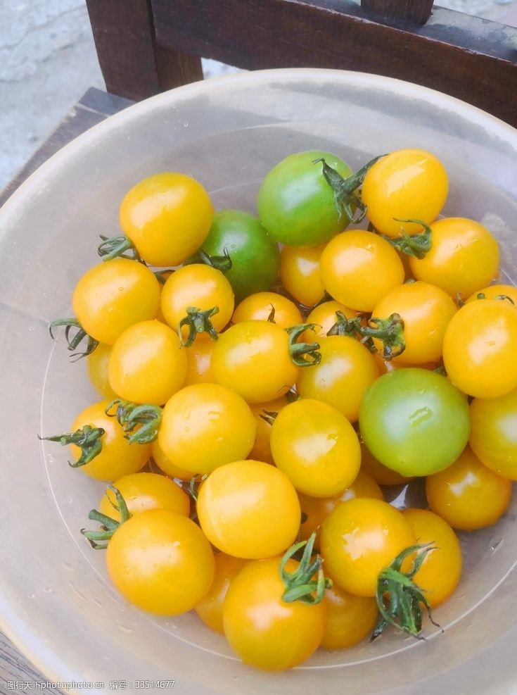 绿色小番茄