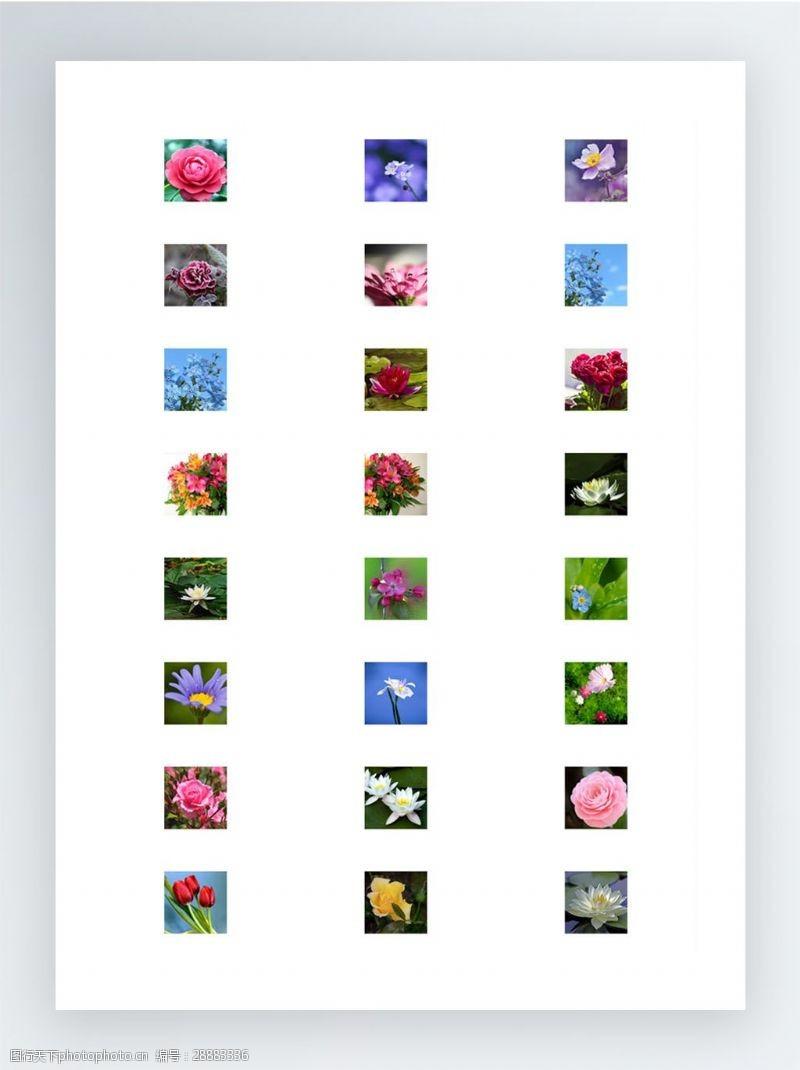 flowers实拍鲜花作品图标集