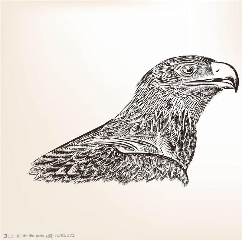 老鹰矢量图手绘线描黑白动物矢量图