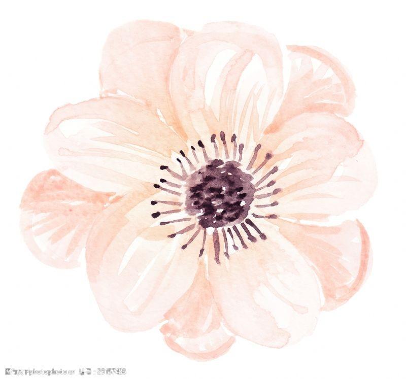嫩肉花瓣卡通透明素材