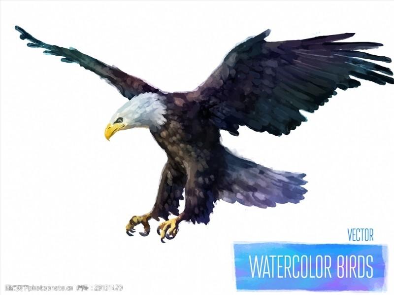 矢量图案共享手绘水彩老鹰矢量图下载
