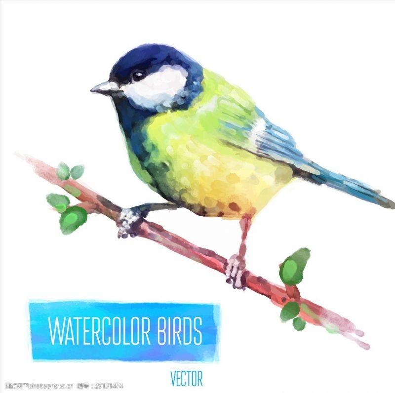 矢量图案共享手绘水彩小鸟矢量图下载