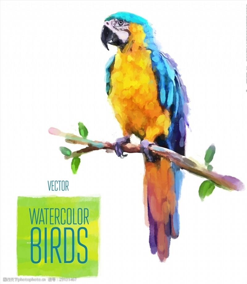 矢量图案共享手绘水彩鹦鹉矢量图下载