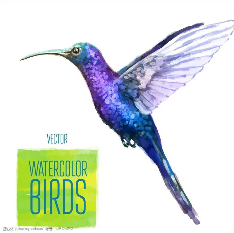 矢量图案共享水彩手绘蜂鸟矢量图下载