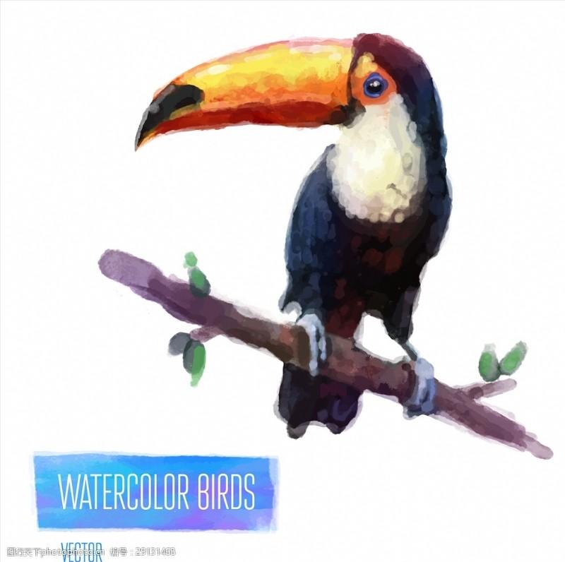 矢量图案共享手绘水彩大嘴鸟矢量图下载