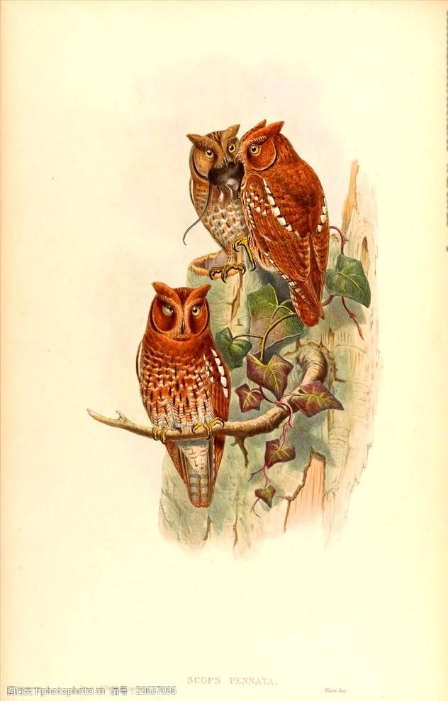 小鸟插图手绘小鸟彩色插画手绘鸟类