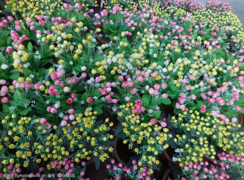 玫瑰花干花鲜花玫瑰花