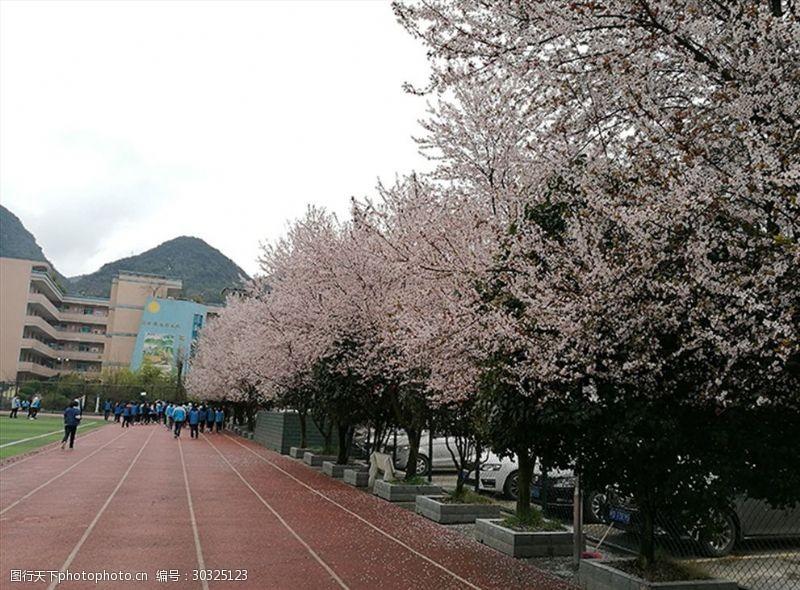 黔桂缘传媒白色樱花