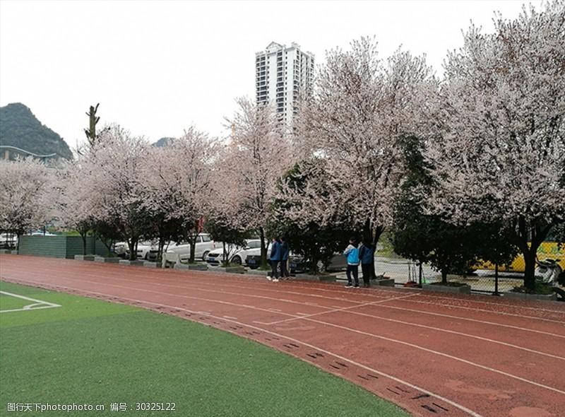 黔桂缘传媒樱花素材