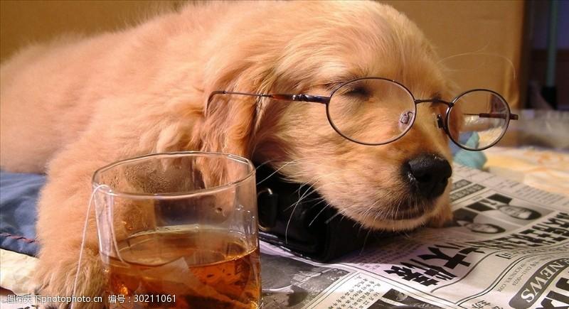 眼镜狗小狗看报