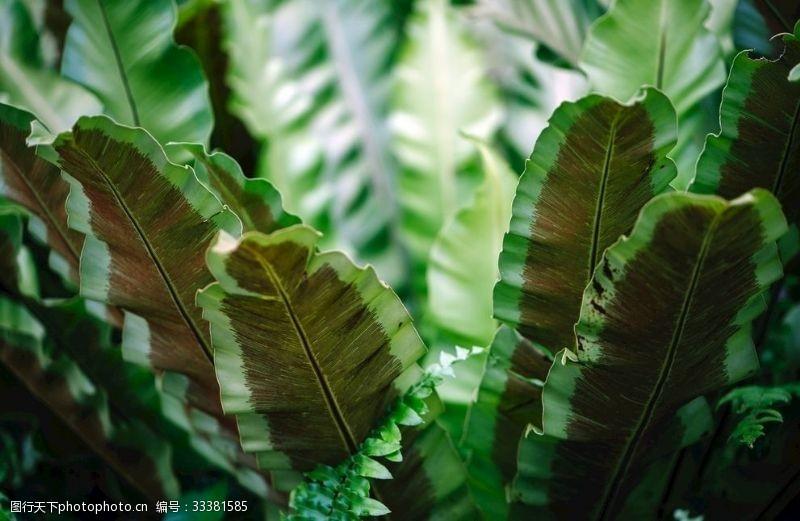 果岭叶子绿色自然结构脉络