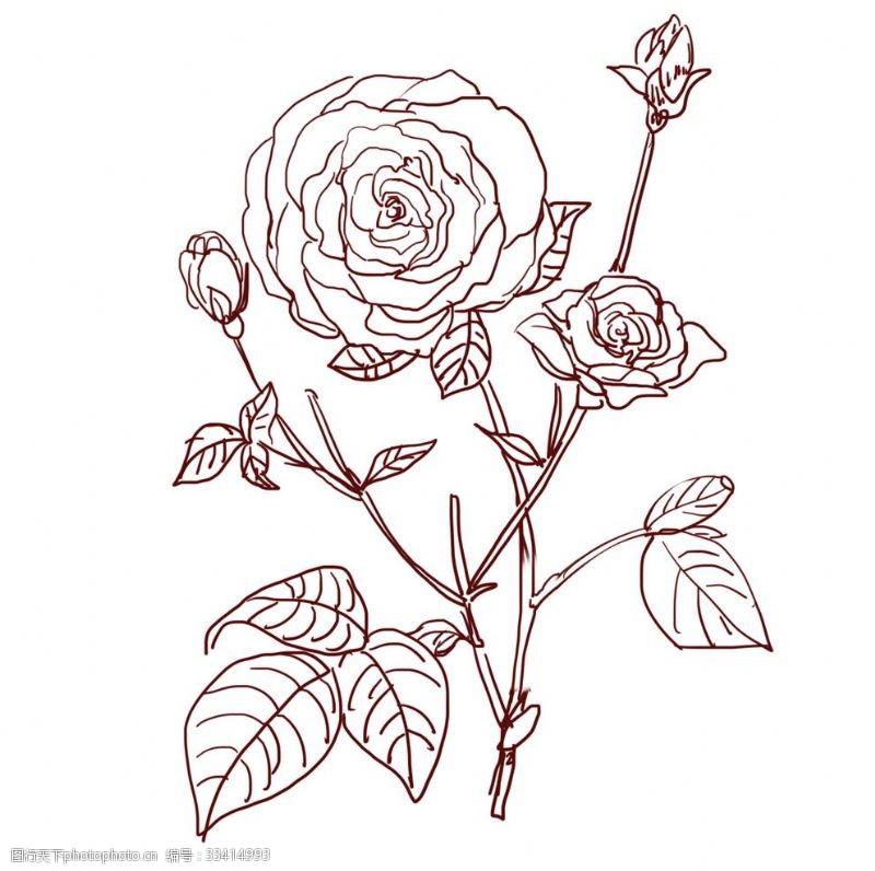 卡通玫瑰花玫瑰花