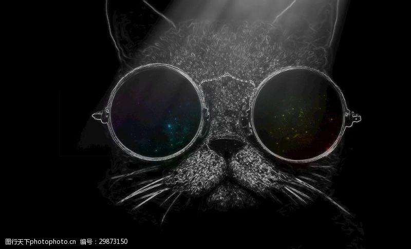 墨镜猫肥猫