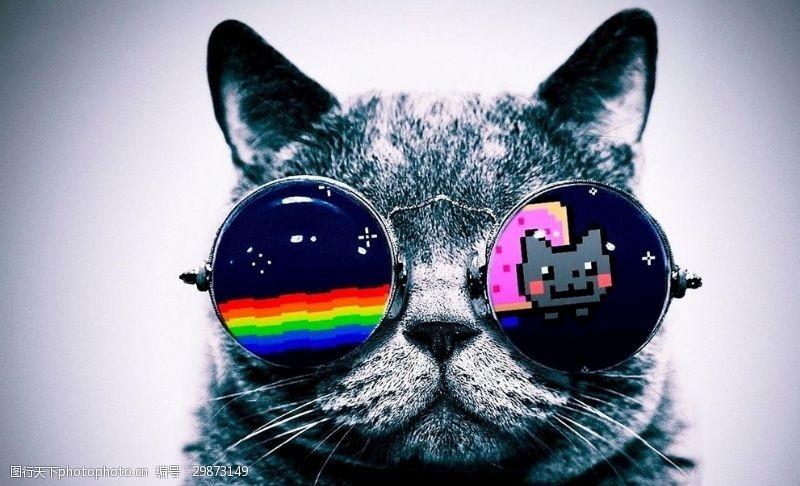 墨镜猫肥猫眼镜猫猫猫咪手绘
