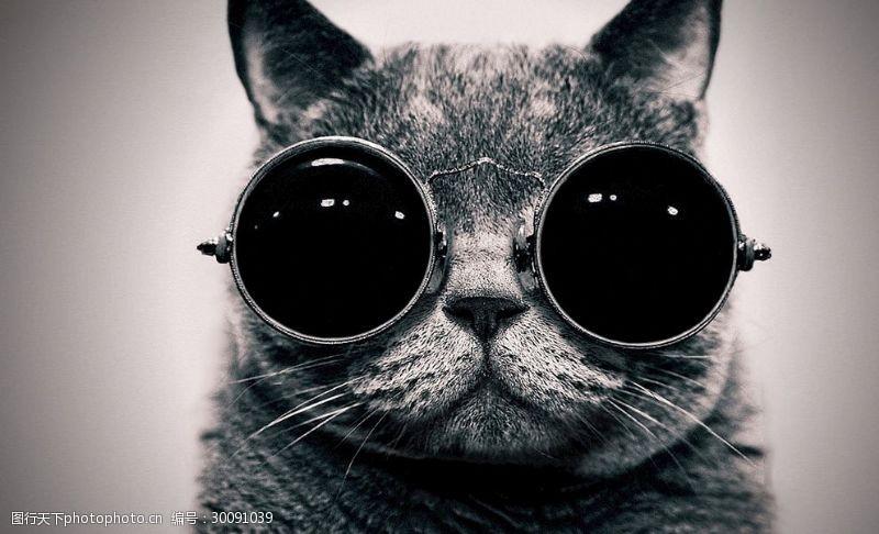 墨镜猫酷猫
