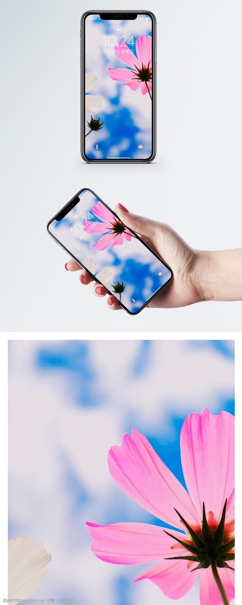 色彩天空格桑花手机壁纸